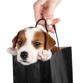 Getting a New Pet: Don't Shop When You can Adopt!
