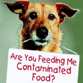 What is REALLY in Your Dog's Food?