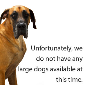 No Large Dogs Available