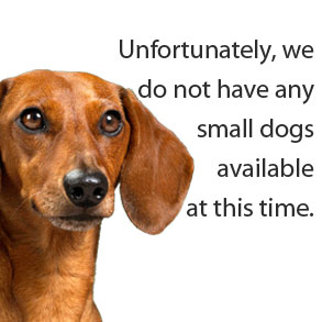 No Small Dogs Available