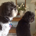 Maggie and Miette